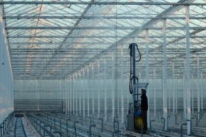 Greenhouse production in Abbotsford